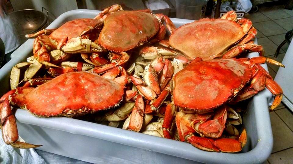 Sapateiras Portuguesas ; Portuguese big crabs